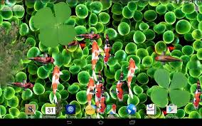 koi free live wallpaper apk koi fish live wallpaper 3d apk free personalization app