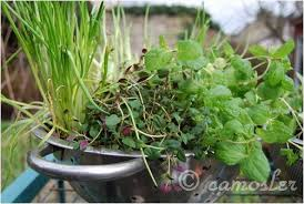 how to get started on a recycled container garden guest post