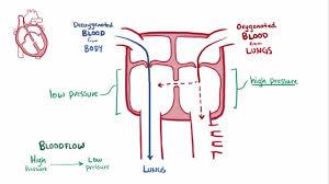 overview of congenital cardiovascular anomalies pediatrics