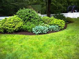 Flowering Shrubs That Like Full Sun - drought resistant flowering plants google search backyard