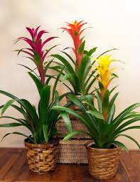 tropical indoor plants tropical house plants home design and
