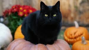 black cat on a pumpkin widescreen wallpaper wide wallpapers net