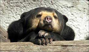 Sad Bear Meme - sad sun bear rain blank template imgflip