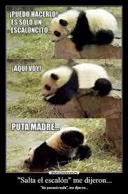 Memes De Pandas - memes de oso panda memes pics 2018