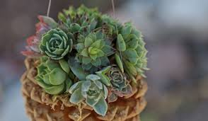 pine cone succulent planters cool crafts the inspired home and