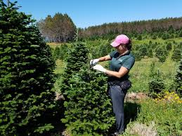 christmas trees and holiday wreaths