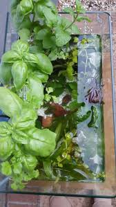 best 25 aquaponics kit ideas on pinterest hydroponic herb