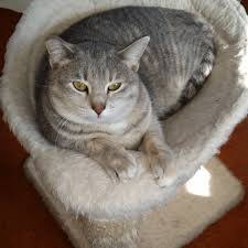 Trixie Cat Hammock by Halo Chicken Canned Cat Food From Chewy Com Cat Tales