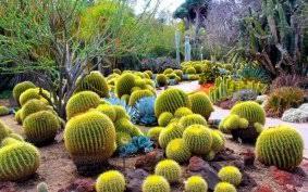 Scottsdale Botanical Gardens Experience Scottsdale Desert Botanical Gardens 7