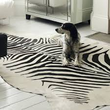 Brown Zebra Area Rug Gray Zebra Rug Home Design Ideas And Pictures