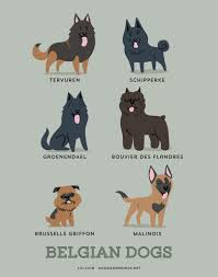 belgian sheepdog clipart belgian dogs art print dog breeds from belgium by doggiedrawings