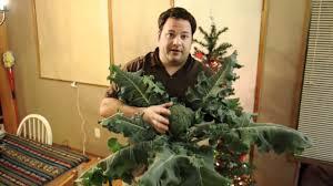 hydroponic broccoli youtube