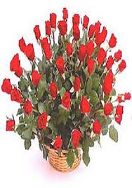 100 Roses 100 Long Stem Roses In A Basket