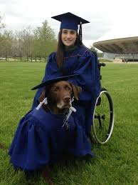college graduation gown service dog arrives at college graduation in cap and gown becomes