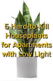 Best Indoor Plants by Best Indoor Plants No Light Contemporary Trends Ideas 2017