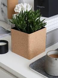 decorating with plants zamioculcas u2014 design hunter