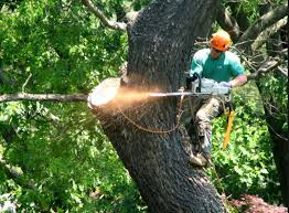 dale phillips tree service opening hours 3300 welch rd