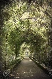 wisteria tunnel stock photo picture and royalty free image image