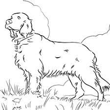 89 boykin spaniel puppy coloring freepuppies