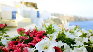 flower greece sea flower summer macro sun buildings