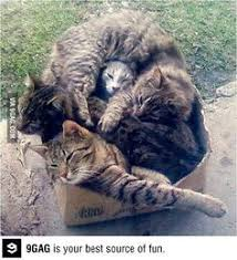 Cat Trap Meme - the cat trap is working cute pinterest cat and animal