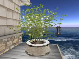 second marketplace light green tree in pot