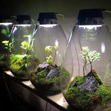 sealed bottle garden led terrariums pinteres