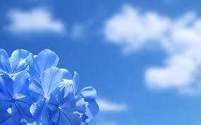 flower hd wallpaper 0012