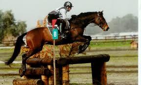 horses outside horse bay jump jumping animals download hd