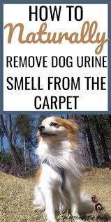 best 25 dog urine ideas on pinterest dog urine remover