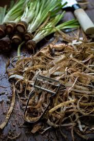 cuisiner les salsifis comment preparer et cuisiner des salsifis jujube en cuisine