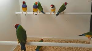 vital l full spectrum light for birds paul bancroft author at planet aviary