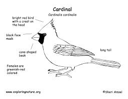 cardinal bw diagram150 jpg