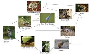 Dominant Plants Of The Tropical Rainforest - organisms of the rainforest the amazon rainforest