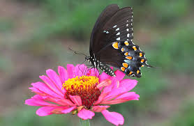 insects butterflies flowers animals