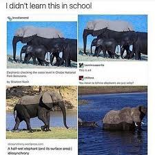 Elephant Meme - ashy elephants animals know your meme