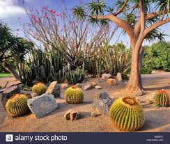 Balboa Park Botanical Gardens by Desert Garden Balboa Park San Stock Photos U0026 Desert Garden Balboa