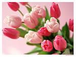 ประโยชน์ของดอกไม้ ]~ | ~ The flower