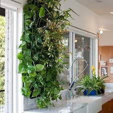 plante cuisine decoration les jardins suspendus s invitent dans votre maison ideeco