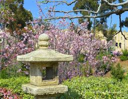 spring at san diego japanese friendship garden and balboa park