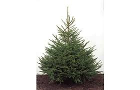 gallery 10 myths about real christmas trees