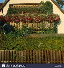 geranien balkon geranienbalkon stock photo royalty free image 81687726 alamy