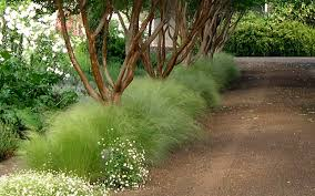 buy pony tails mexican feather grass from wilson bros