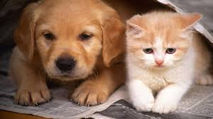 cats and dogs wallpaper hd cute dog and cat wallpaper hd 11253