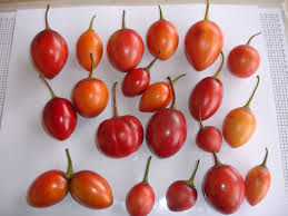 promising fruit the tree tomato