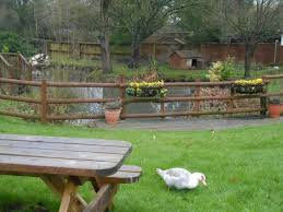 Backyard Duck Ponds Duck Pond Picture Of The Duck On The Pond Banbury Tripadvisor
