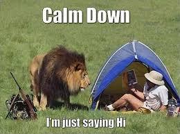 Calm Down Meme - animal memes calm down funny memes