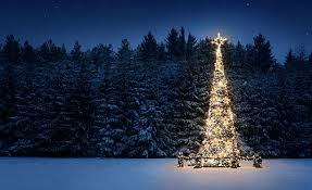 christmas tree pictures images and stock photos istock