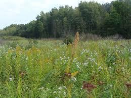 native wisconsin plants autumn in se wisconsin prairie botanist