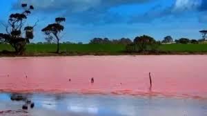 natural wonders lake hillier australia youtube